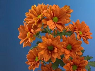 Myndir af Gulum og Appelsínugulum blómum - SKOÐA - image
