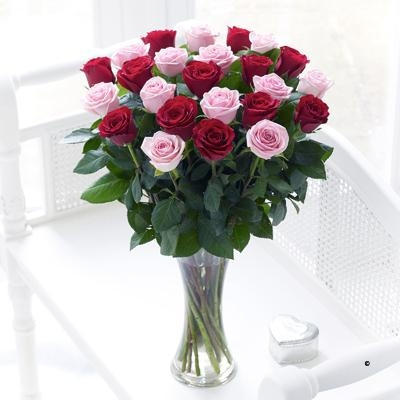 24 Red and Pink Roses image